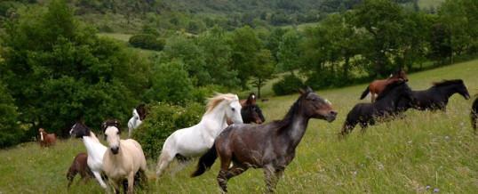 L'équitation éthologique : témoignage d'un passionné